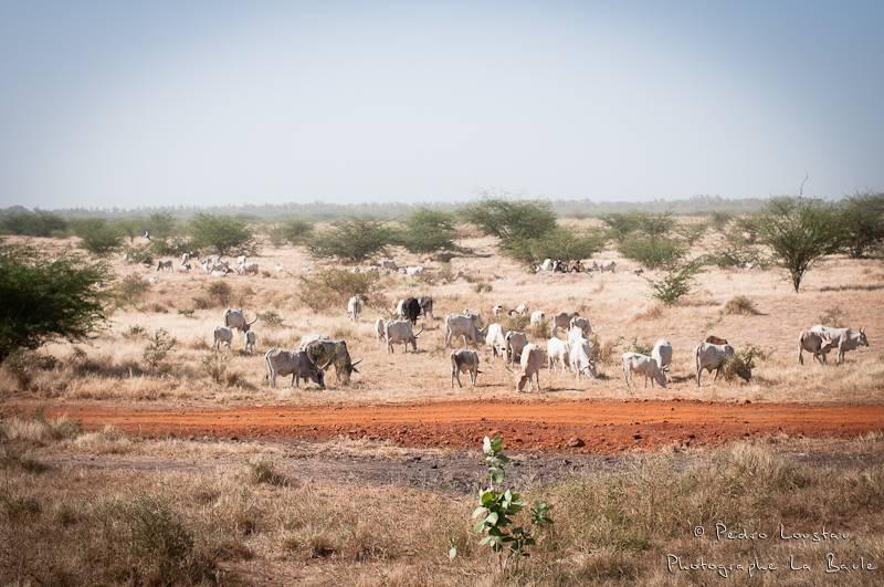 ©pedro loustau, sénégal, afrique, paysage, landscape,