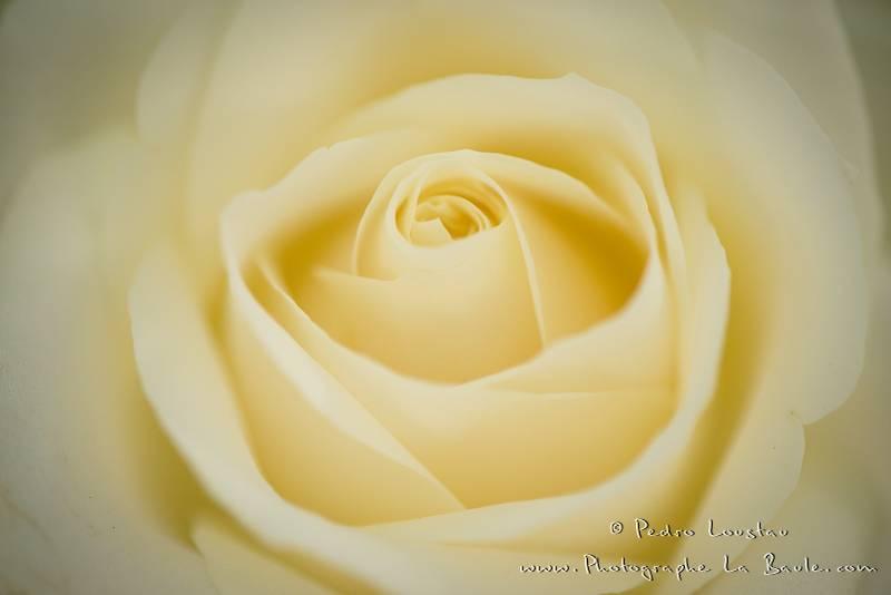 flower power -©pedro loustau 2012- photographe la baule nantes guérande -mariage-