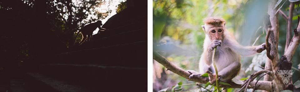montage 40 - photographe la baule - © Pedro Loustau 2014 - www.photographelabaule.com