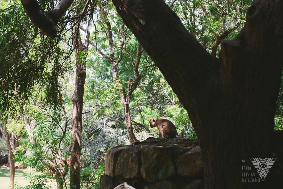 guardian monkey - photographe la baule - © Pedro Loustau 2014 - www.photographelabaule.com