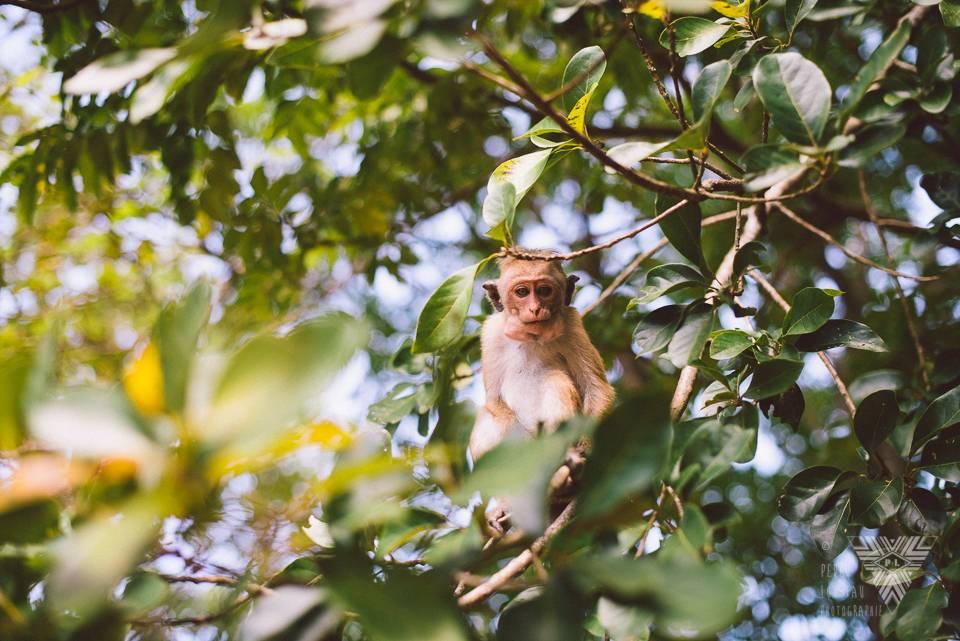 monkey - photographe la baule - © Pedro Loustau 2014 - www.photographelabaule.com