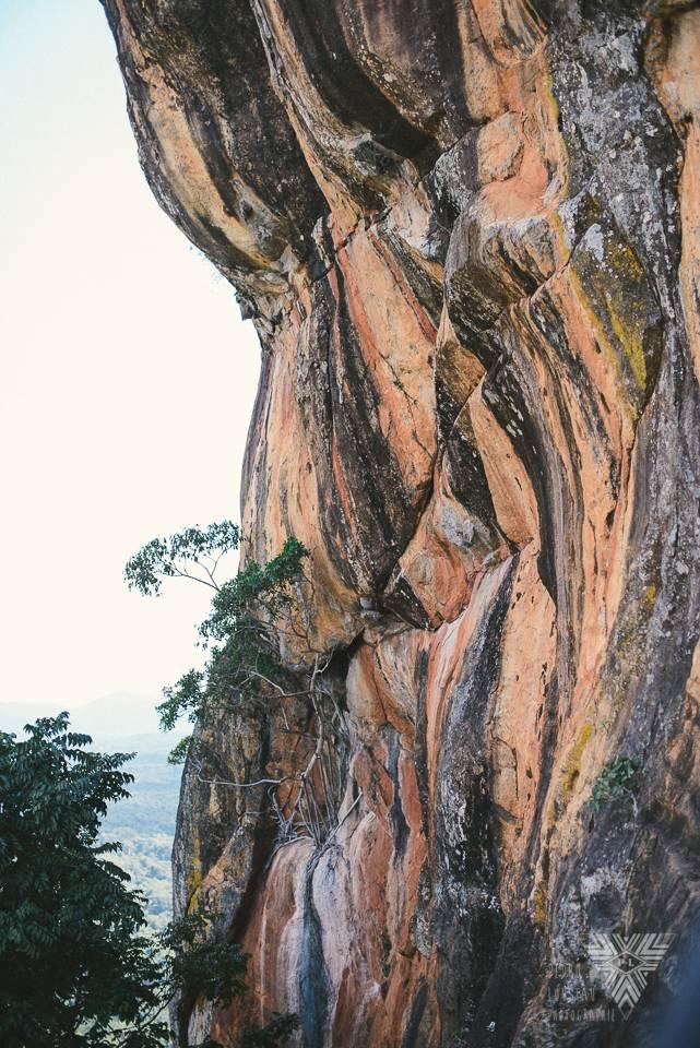 les arbres poussent partout! - photographe la baule - © Pedro Loustau 2014 - www.photographelabaule.com