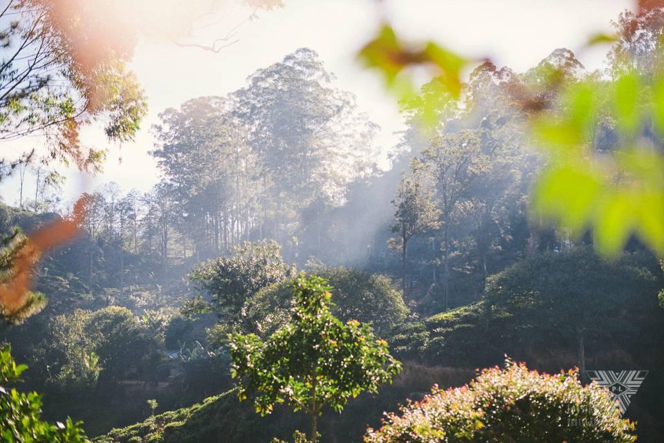 forest - ©Pedro Loustau 2014 - photographe la baule - www.photographelabaule.com