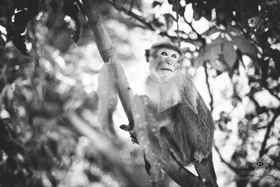 monkey in a tree - ©Pedro Loustau 2014 - photographe la baule - www.photographelabaule.com