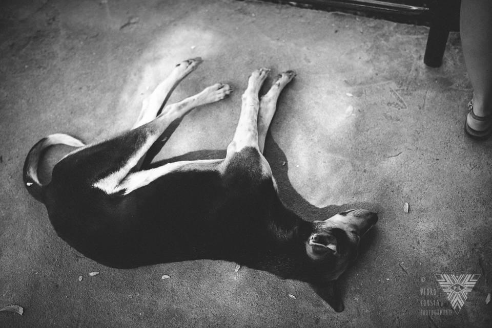 sleeping dog - ©Pedro Loustau 2014 - photographe la baule - www.photographelabaule.com