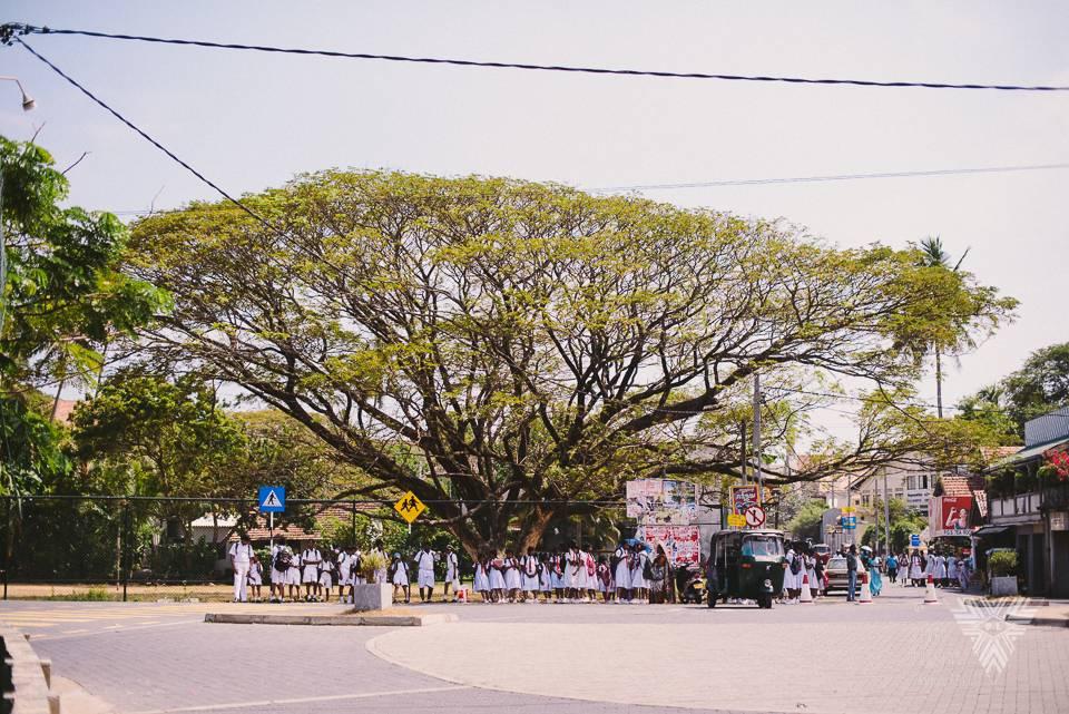 school tree - ©Pedro Loustau 2014 - photographe la baule - www.photographelabaule.com