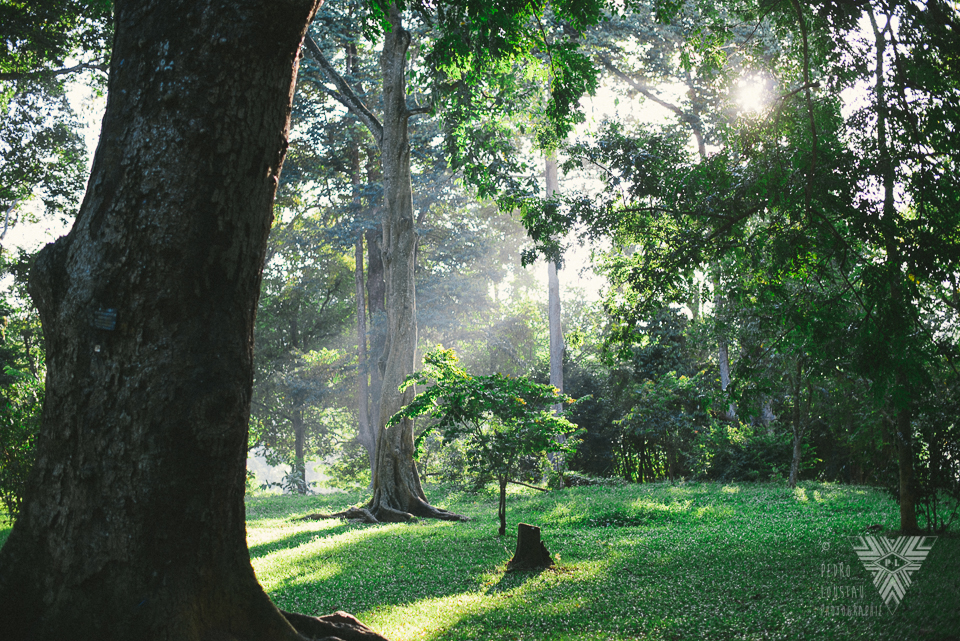 forest - photographe la baule - © Pedro Loustau 2014 - www.photographelabaule.com